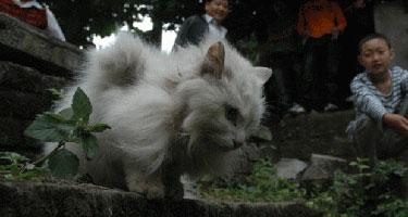 winged_cat