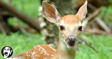fawn_beaten_to_death