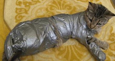 duct_tape_cat